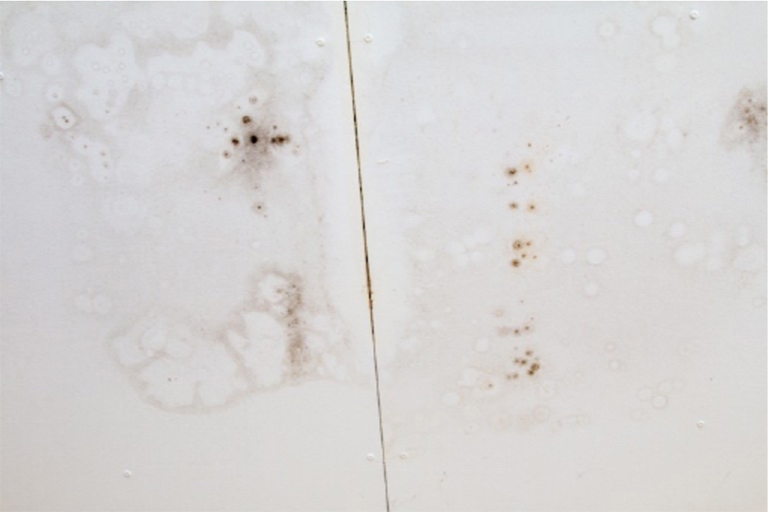 Growth of Mould