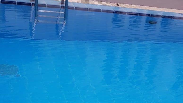 Swimming pool water testing Singapore